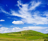 Beautiful vineyard landscape with cloudy blue sky Stock Images