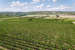 Beautiful vineyard landscape with grapes ready for harvest, sunny autumn day, Southern Moravia, Czech Republic. Aerial view stock photography