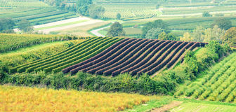 Beautiful Vineyard Landscape Royalty Free Stock Images