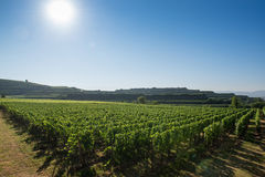 Beautiful Vineyard Landscape In Ihringen, South Germany Stock Photo
