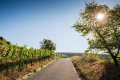 Beautiful Vineyard Landscape In Ihringen, South Germany Stock Photography