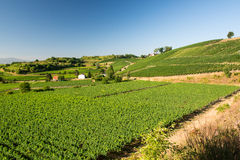Beautiful Vineyard Landscape In Ihringen, South Germany Stock Image