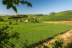 Beautiful Vineyard Landscape In Ihringen, South Germany Stock Images