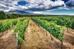 Beautiful vineyard landscape Royalty Free Stock Photography