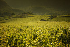 Beautiful vineyard landscape in Provence Stock Photo