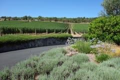 Beautiful Vineyard Stock Photo