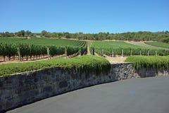 Beautiful Vineyard Stock Photography