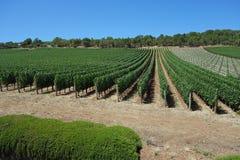 Beautiful Vineyard Stock Photos