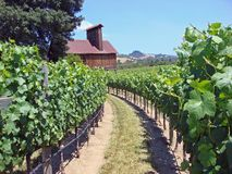 Beautiful Vineyard in Northern California. With vines in production stock photo