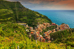 Beautiful vineyard and old town panorama of Manarola,Italy,Europe Stock Images