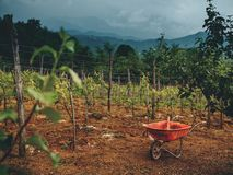 Beautiful vineyard stormy sky and cart on ground. In georgia stock photography