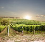 Beautiful vineyard sunset. In South Europe, wine landscape royalty free stock photos
