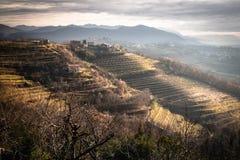 Beautiful vineyard terraces in goriska brda in wintertime sunlight, slovenia. Beautiful vineyard terraces in goriska brda in wintertime sunlight royalty free stock photo