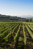 Beautiful Vineyard Terraces In Ihringen, South Germany Royalty Free Stock Photo