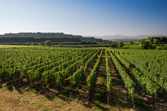 Beautiful Vineyard Terraces In Ihringen, South Germany Royalty Free Stock Image