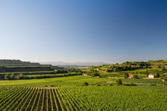 Beautiful Vineyard Terraces In Ihringen, South Germany. Beautiful Vineyard Terraces With Blue Sky And Sunshine in Ihringen, Kaiserstuhl, Germany. This Region Has stock photography