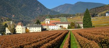 Beautiful vineyards at Abbey of Novacella, south tyrol, Bressanone, Italy. The Augustinian Canons Regular Monastery of Neustift. Beautiful rows of vineyards at Royalty Free Stock Images