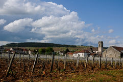 The beautiful vineyards in beaune cote de beaune where wine is Stock Images