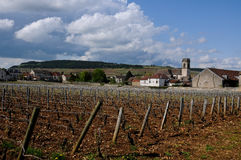 The beautiful vineyards in beaune cote de beaune where wine is Stock Photos