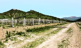 Beautiful vineyards of Crimea Stock Photos