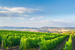 Beautiful vineyards on the hills of the peaceful Tuscany, Italy Stock Photos