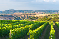 Beautiful vineyards on the hills. Royalty Free Stock Photography