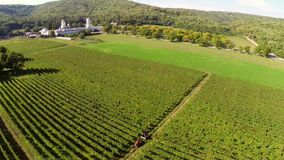 Beautiful vineyards landscape with monastery in the background, aerial view.