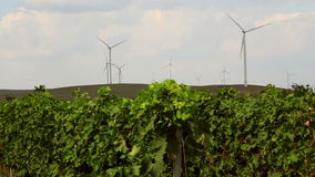 Beautiful vineyards landscape with wind turbines in the background stock footage