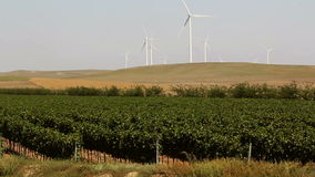 Beautiful vineyards landscape with wind turbines in the background stock video footage