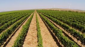 Beautiful vineyards landscape with wind turbines in the background, aerial view stock video