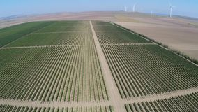 Beautiful vineyards landscape with wind turbines in the background, aerial view stock footage