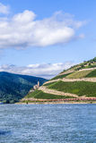 Beautiful vineyards at  the rhine valley in Ruedesheim with trai Stock Photography