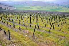 The beautiful vineyards in sancerre where wine is produced , fr. Ance royalty free stock photo