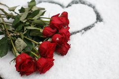 Beautiful vinous roses on the snow with heart. Beautiful vinous roses on the white snow with heart Stock Photos