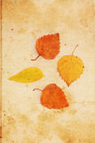 Beautiful vintage background with autumnal leaves Royalty Free Stock Photography