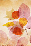 Beautiful vintage background with autumnal leaves Royalty Free Stock Photo