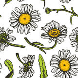 Beautiful vintage background with black daisies seamless patern on white background. Vector Royalty Free Stock Photo