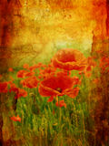 Beautiful vintage background with poppies Royalty Free Stock Photos