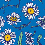 Beautiful vintage background with white daisies. Seamless pattern on blue background. Vector illustration Royalty Free Stock Image