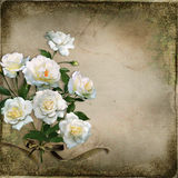 Beautiful vintage background with white roses Stock Image