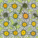 Beautiful vintage background with white sketch daisies seamless pattern on green background. Vector Stock Photos