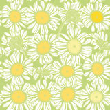 Beautiful vintage background with white sketch daisies seamless pattern on light green background. Vector Royalty Free Stock Images