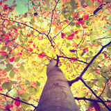 Beautiful vintage colorful autumn seasonal tree leaves Stock Photos