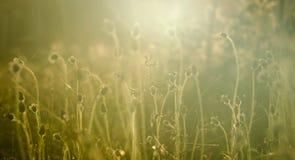 Beautiful vintage flower grass Stock Image