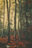 Beautiful vintage forest. With fog stock photo