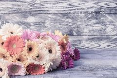 Gerbera Flowers on Wooden Background Stock Image