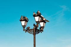 Beautiful vintage old retro electric street lamp with taking off and landing, sitting, resting pigeons on blue sky background. Beautiful vintage old retro stock photo