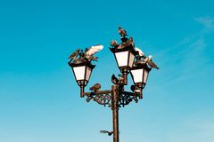 Beautiful vintage old retro electric street lamp with taking off and landing, sitting, resting pigeons on blue sky background. Beautiful vintage old retro royalty free stock photo