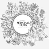 Beautiful vintage rope frame with medicinal herbs and flowers on white backgroun. D, vector hand-drawn illustration, echinacea, chamomile, lavender, calendula Stock Photography