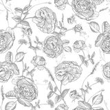 Beautiful Vintage Seamless Roses Background Royalty Free Stock Images
